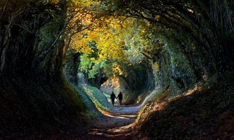 Autumn tree tunnel